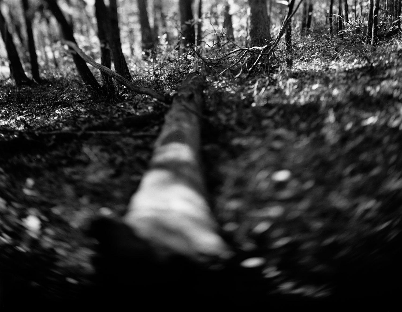 fallen-body-treeG.jpg