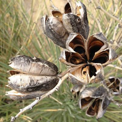 desertpods.jpg
