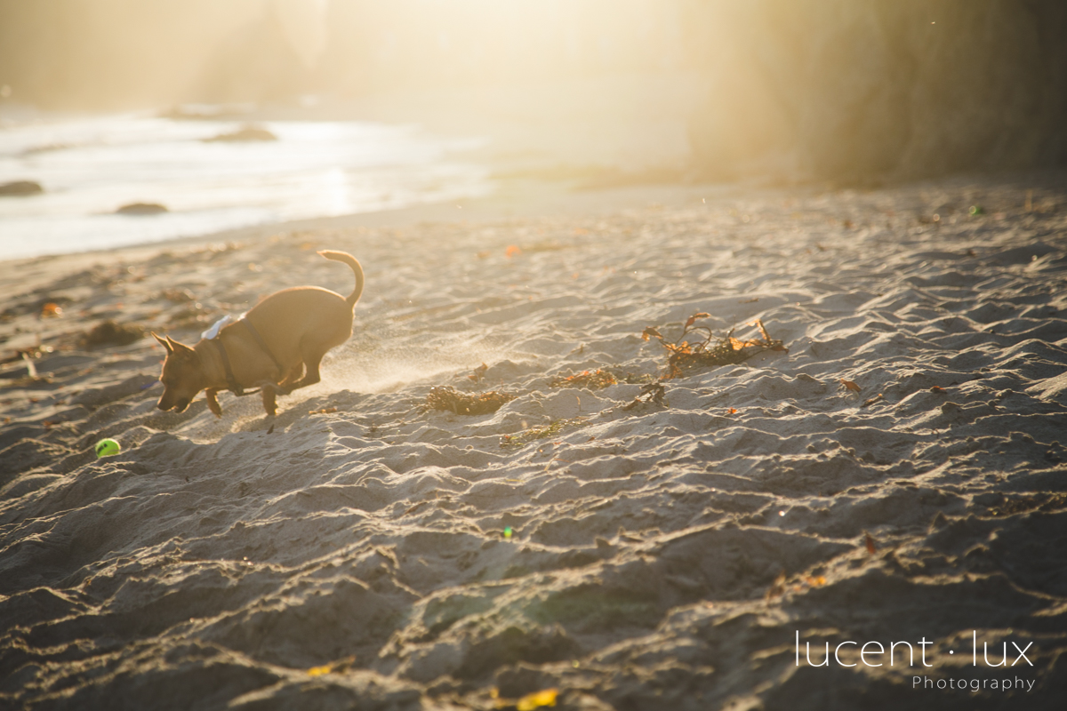 Washington_DC_Photographer_Beach_Wedding_Photography_Maryland-114.jpg