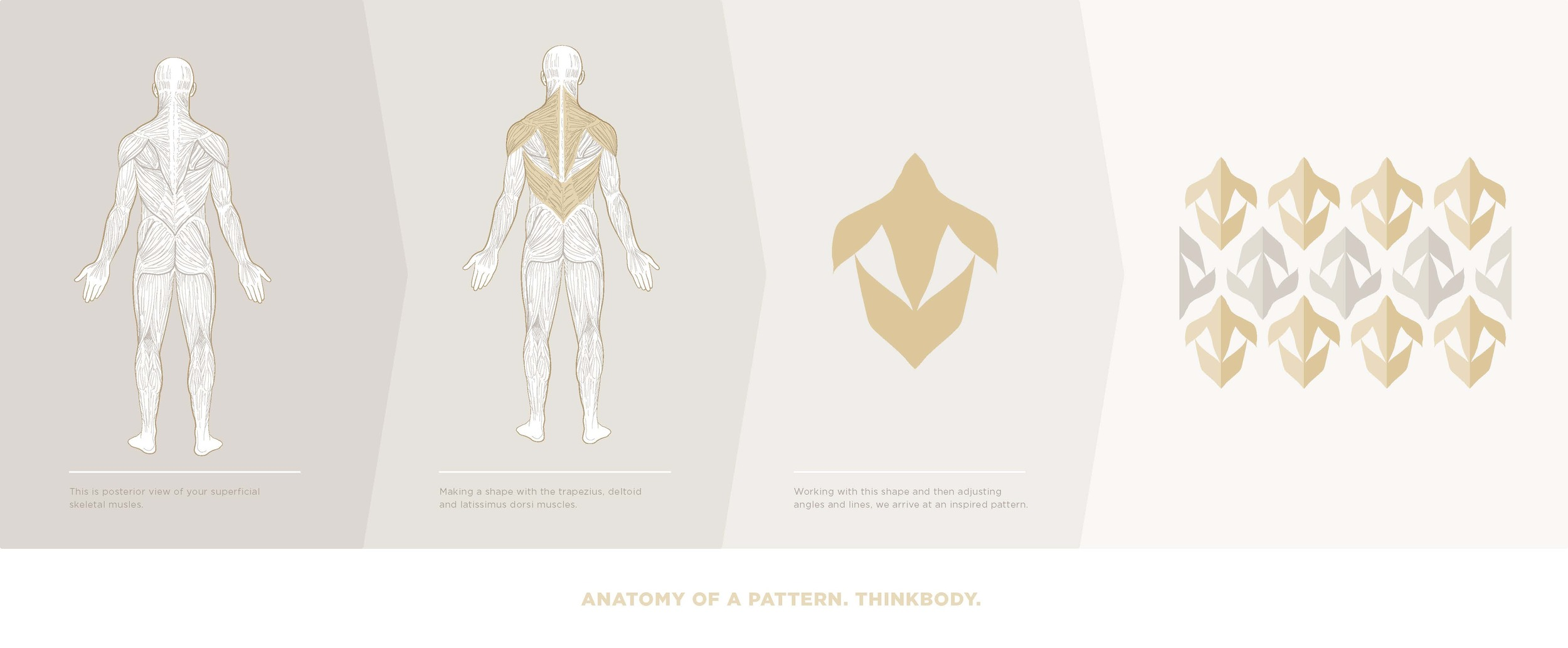 back muscles diagram-1_website.jpg