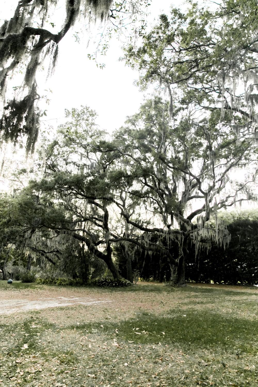 Florida Engagement Photos-16.jpg