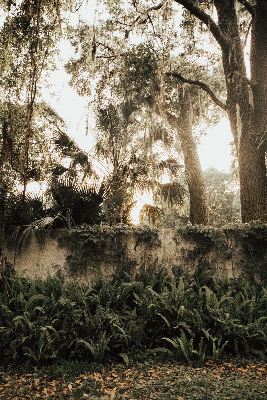 Florida Engagement Photos-46.jpg