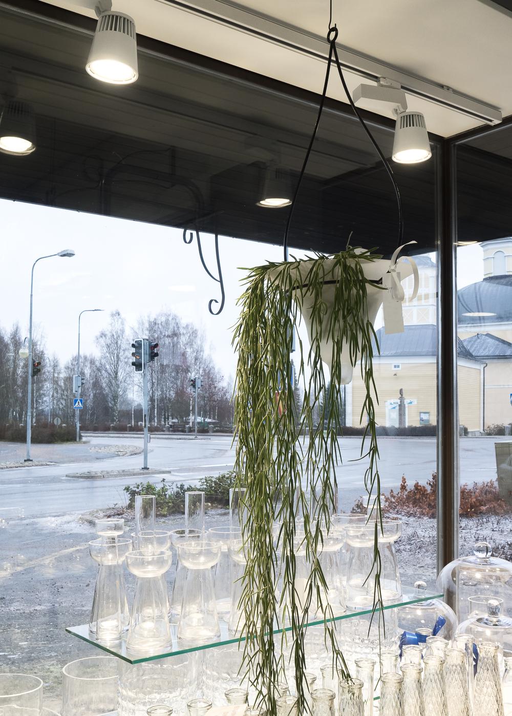 Kukkakontti-7.jpg