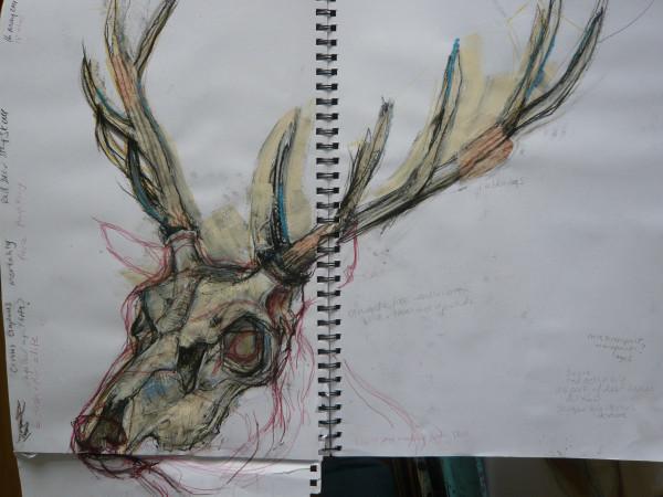 stag skull sketch.jpg