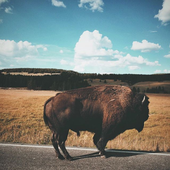 My favorite animal is the buffalo. - And my favorite place in the world is Yellowstone National Park.