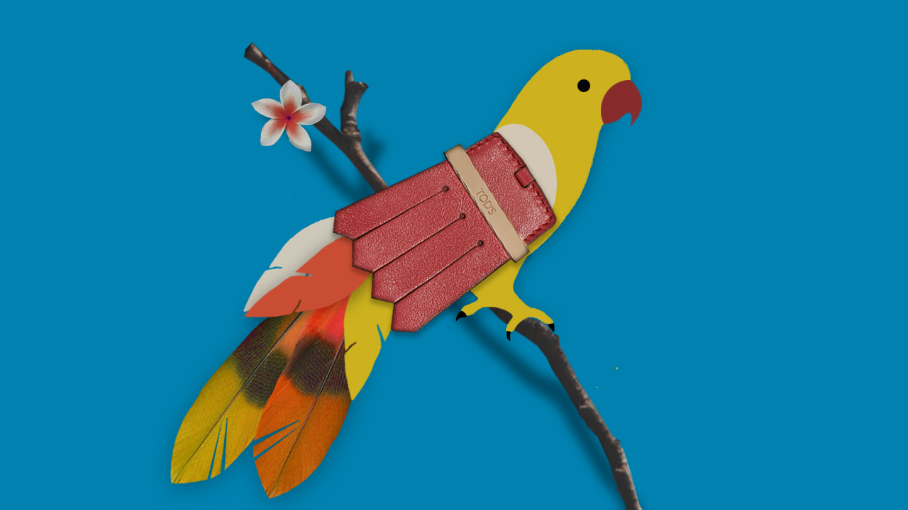 Cmelis_Collage_TODS_Parrot.jpg