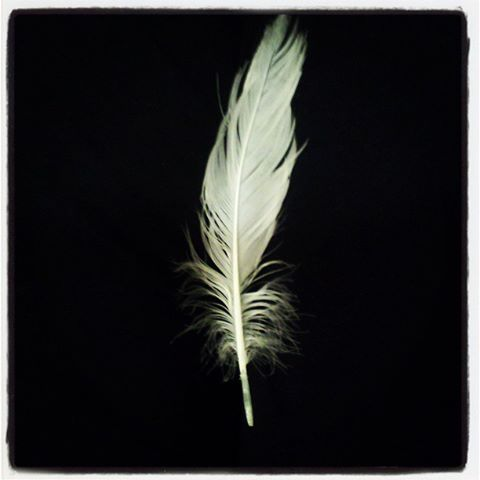 Finding white feathers in your path, home, or flying near you are often love notes from Spirit.