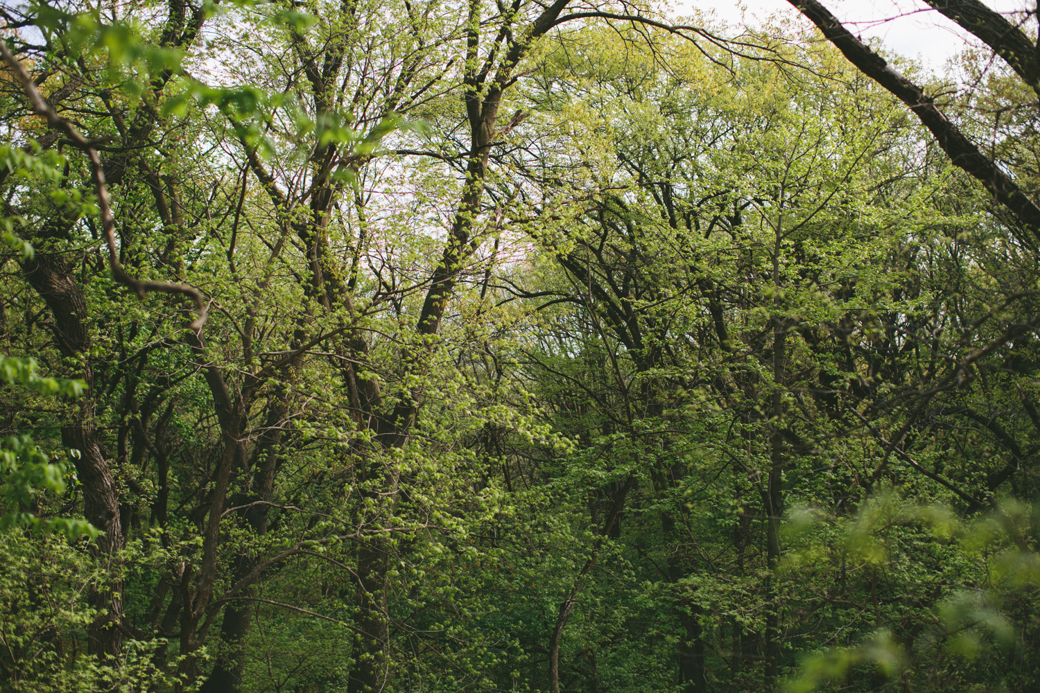 Spring Forest - Outdoors