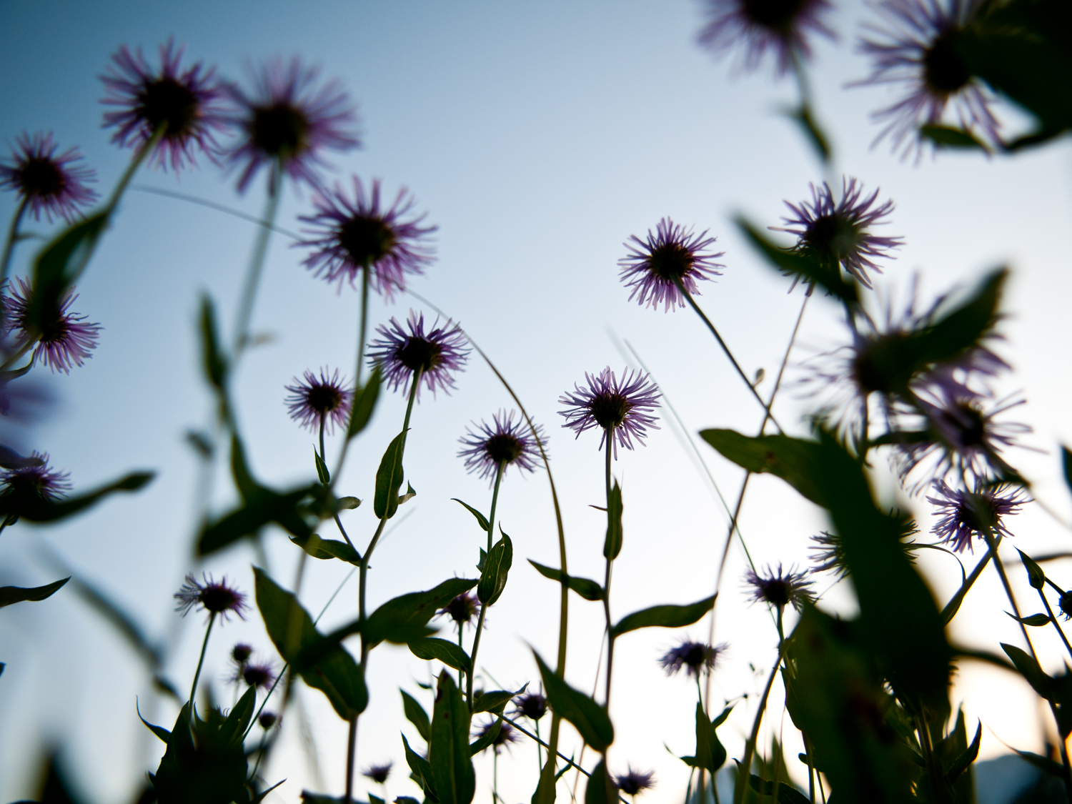Flowers - Outdoors