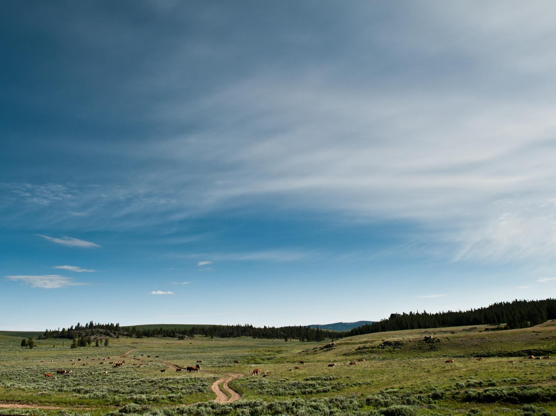 Mountain Pasture - Outdoors