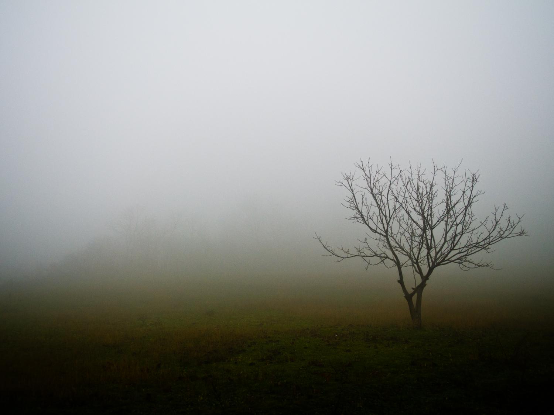 Tree - Outdoors