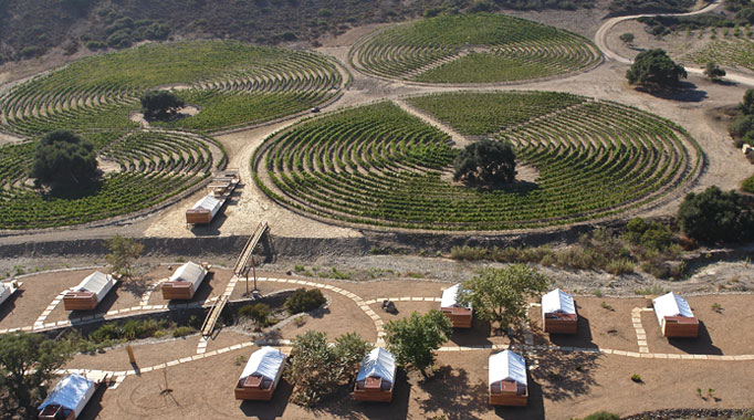 Crop Circle Vineyards. After  Signs , I think I'll stay far away from those!
