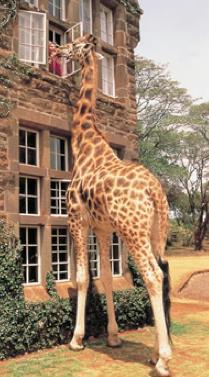 giraffe-manor-kenya.jpg
