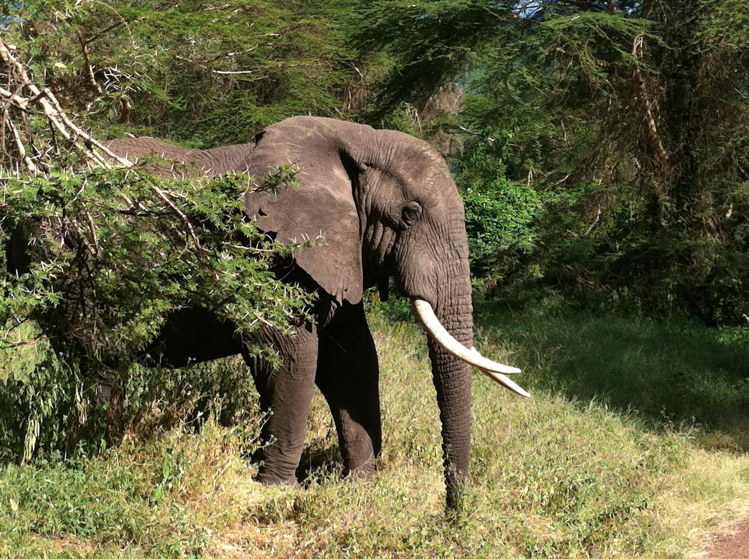 Ngorongoro Crater Safari Shots.JPG