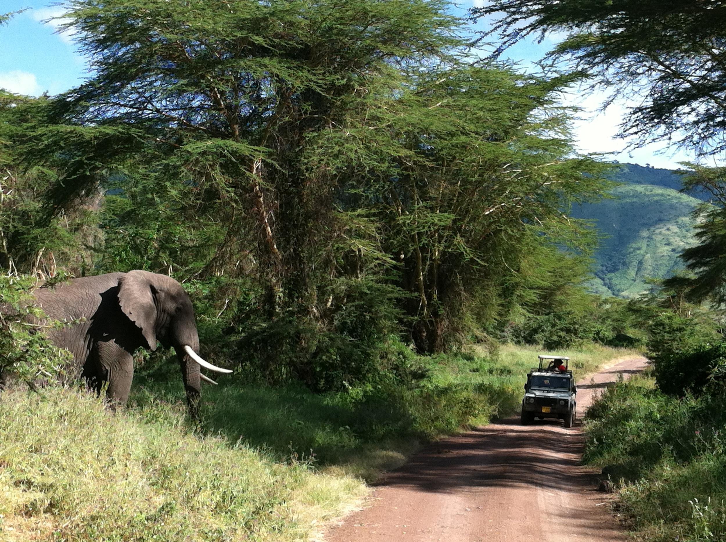 Elephants on Tanzania Safari Crater.JPG
