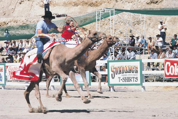 Camel Races Reno Nevada