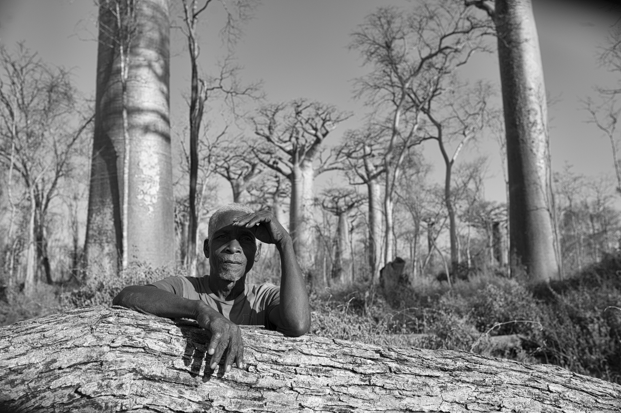 Forests Baobab-Halo- JJW-2.jpg