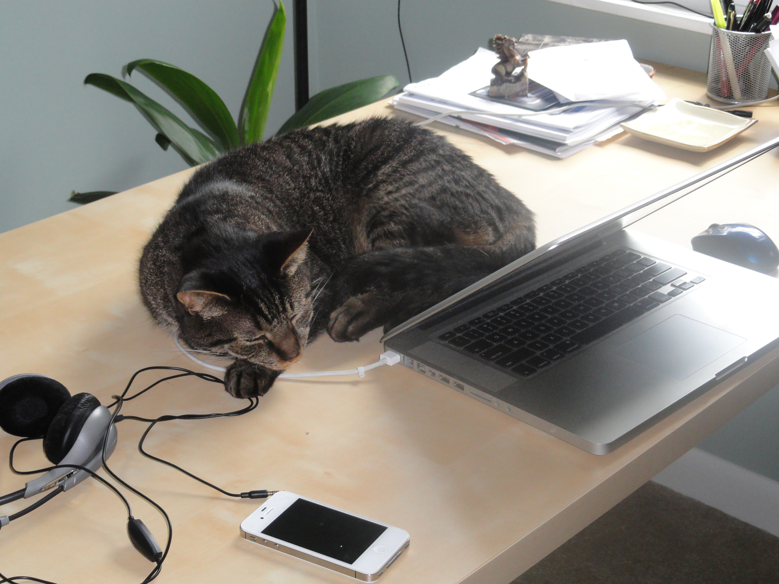 sammy on desk.jpg