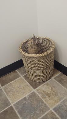 cat basket .jpg