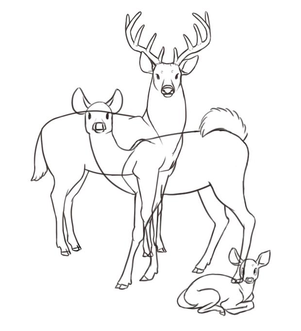 deer lines.png