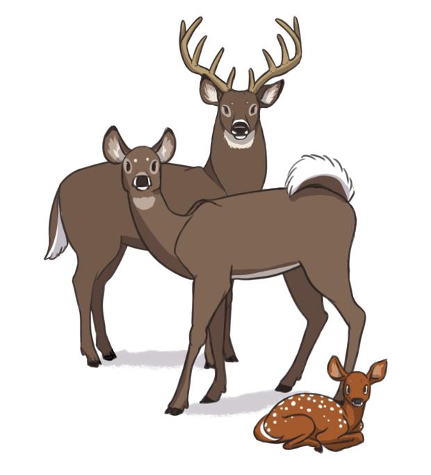 deer shadows.png