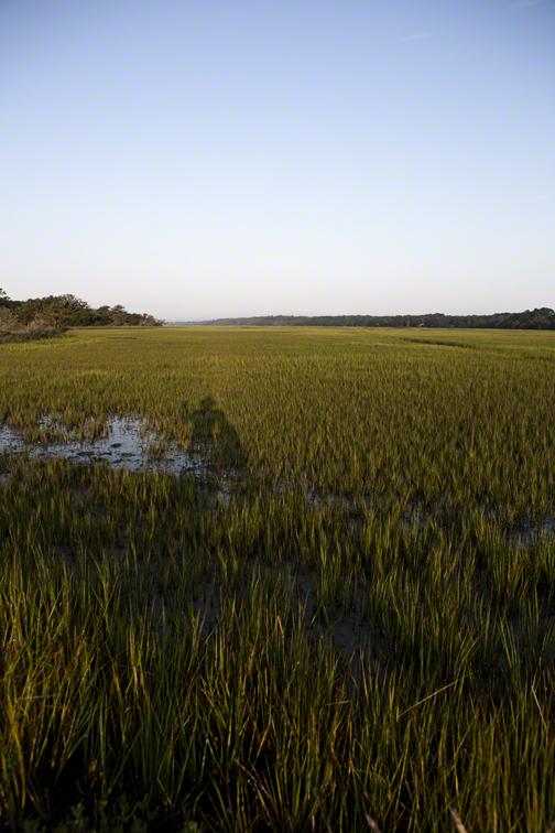 self portrait in the marsh