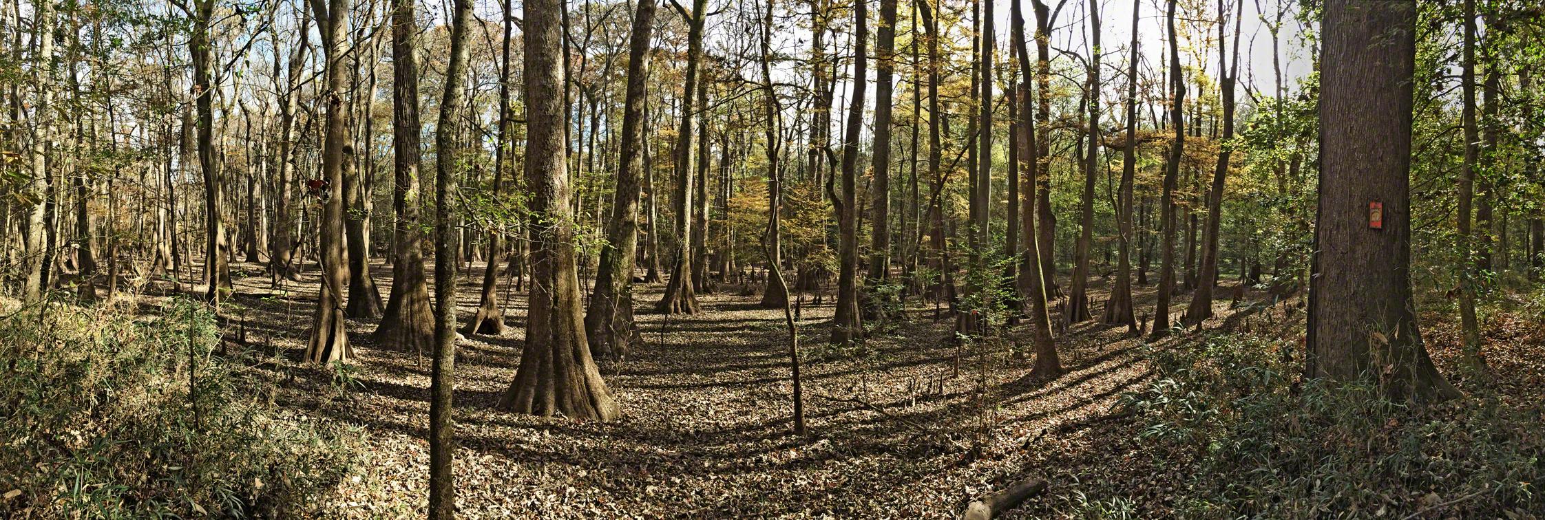 cypress slough panorama