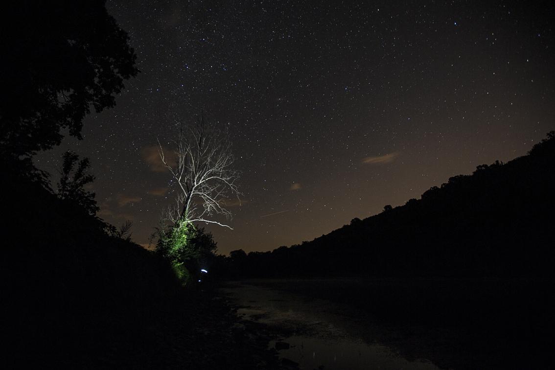 The dead tree near our campsite.