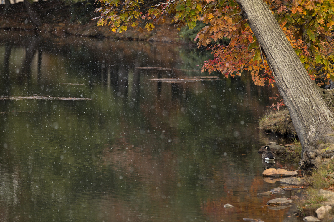 Snow and fall colors in early october at Kooser Lake state park, PA