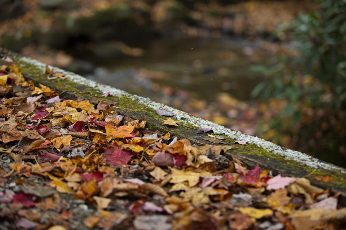 The foot bridge over Kooser Run, covered with freshly fallen leaves and a light dusting of snow.