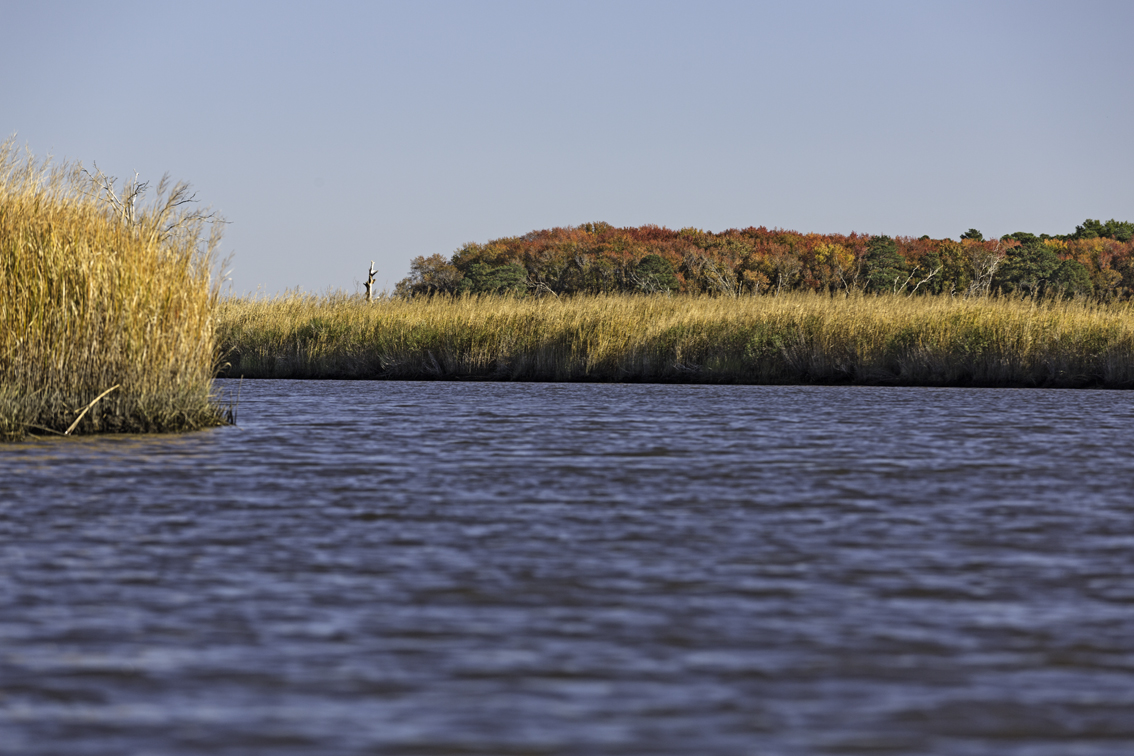 Fall colors on the eastern shore of MD.
