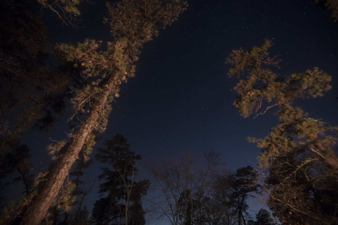 Stars and pines around the fire at Goshen Pond.