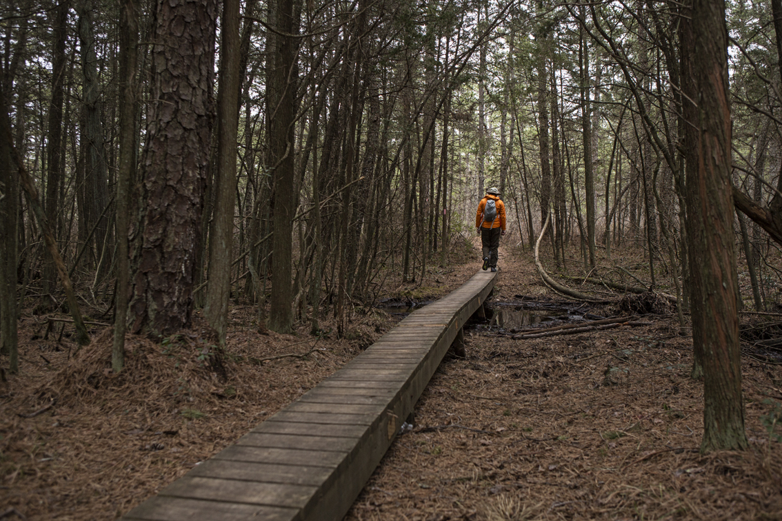 Boardwalks and swamps.
