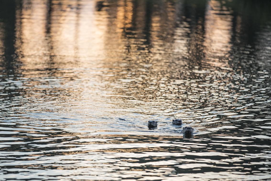 Sea Otters!