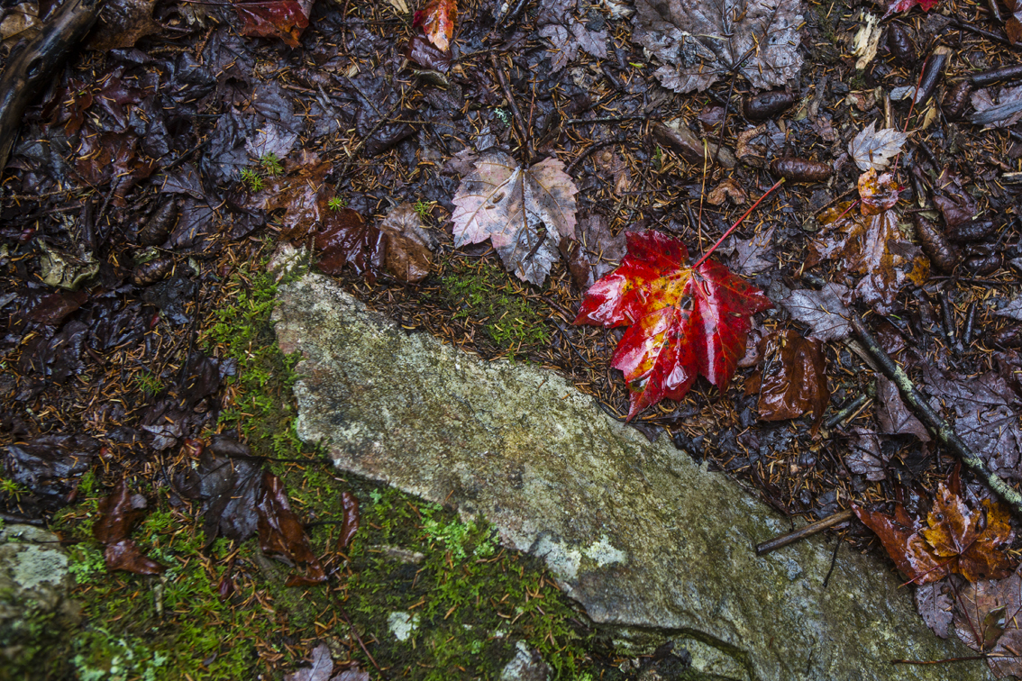 Some vibrant red and green on the forest floor.
