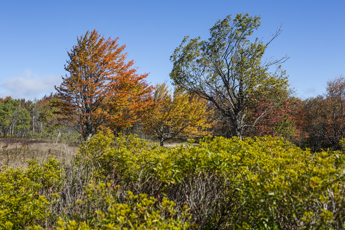 Early fall colors on some windswept trees.