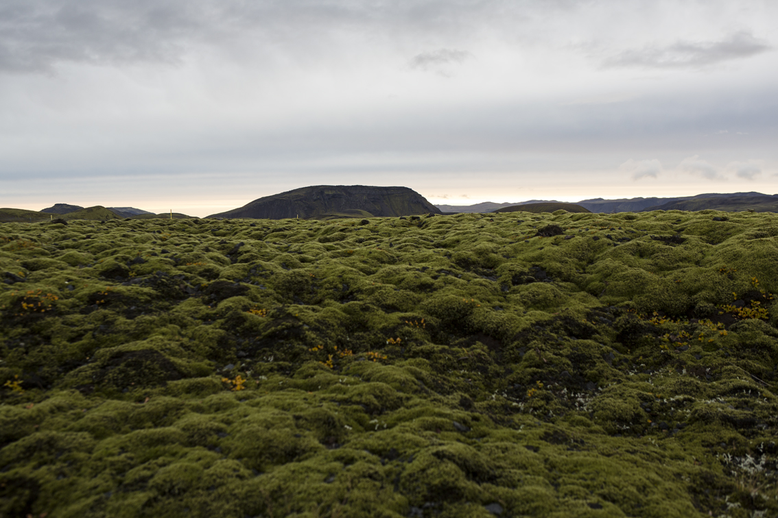 A field of moss over an ancient lava flow.