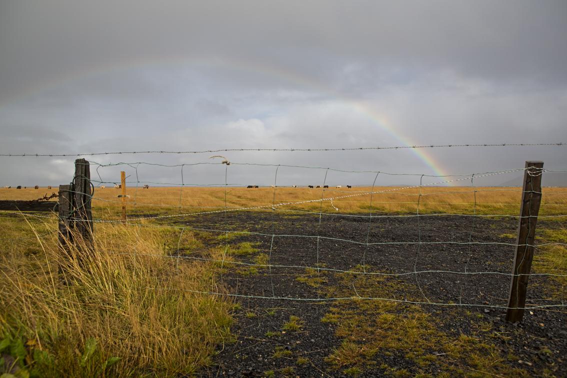 Serious rainbow on the way to Seljalandsfoss waterfall.