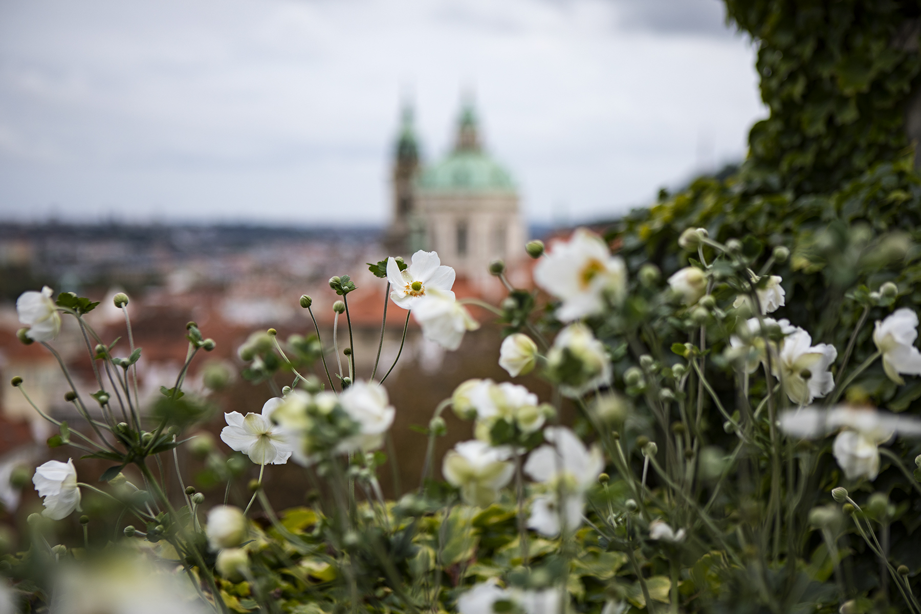 A view from the gardens of Prague Castle.