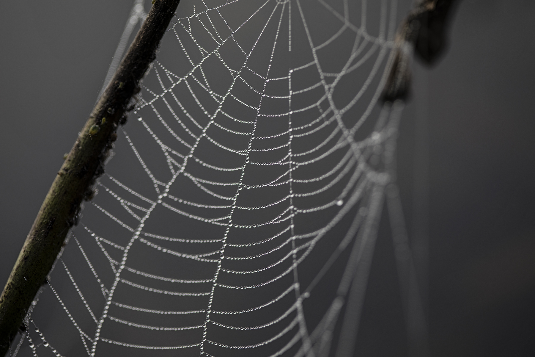 Dew drops and spiderwebs.