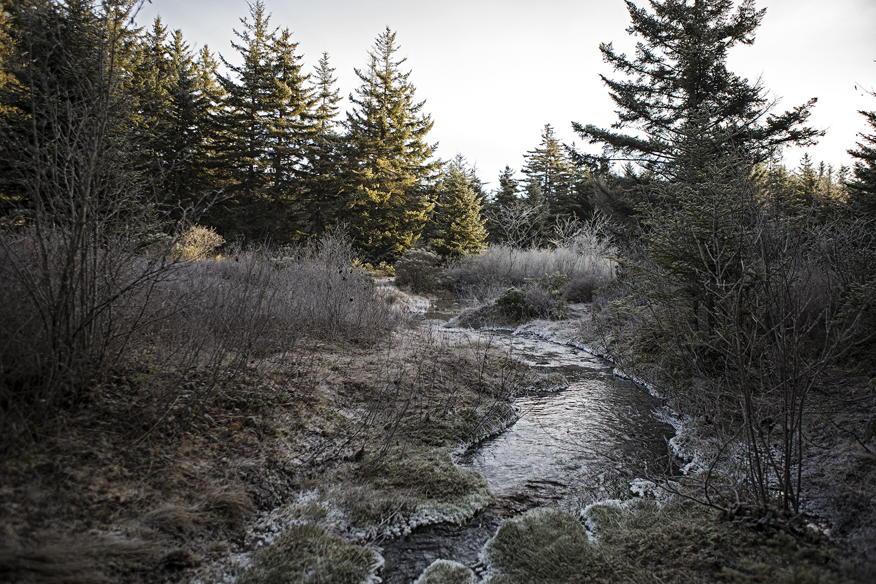 A frozen tundra
