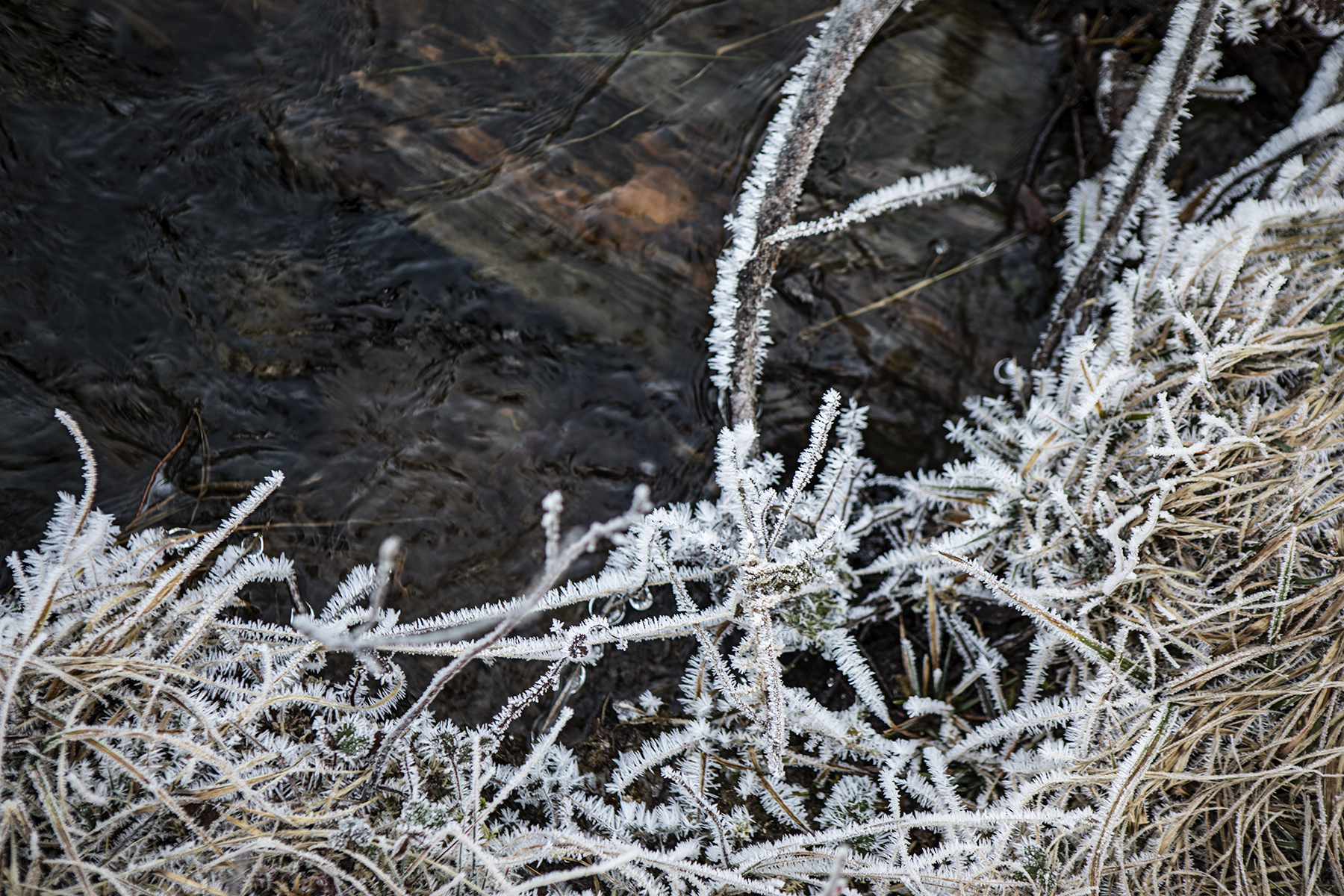 Really cool ice crystals on the creekside vegetation.