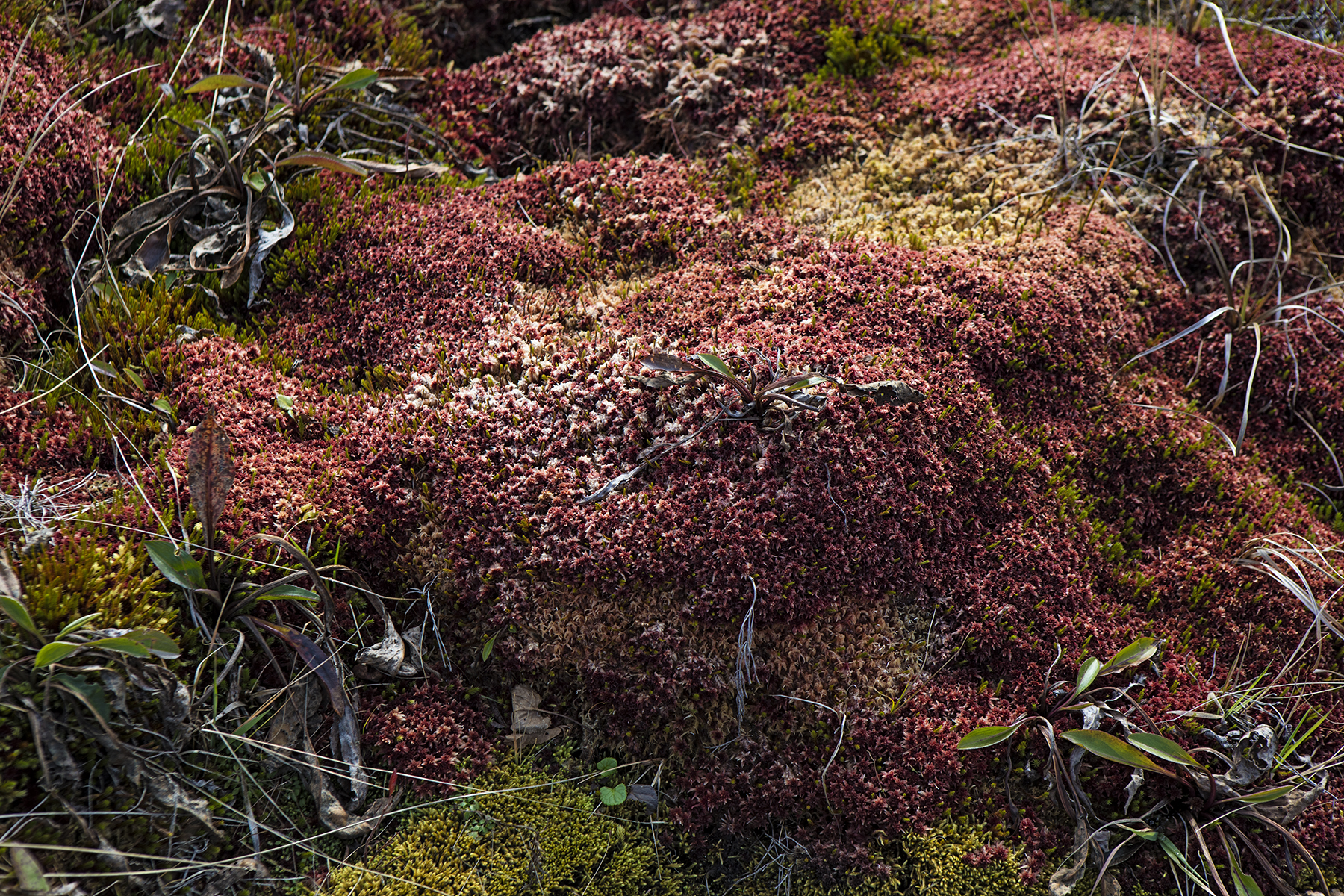 Colorful moss on the plateau.