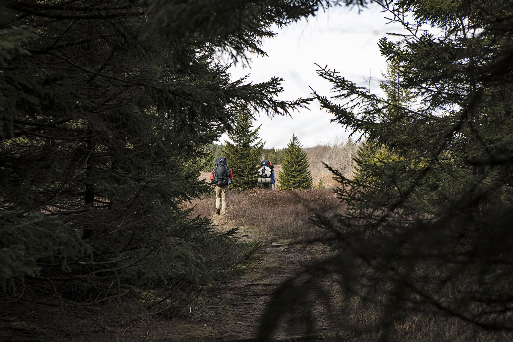 Loren and Nate escaping the shade of the pines.