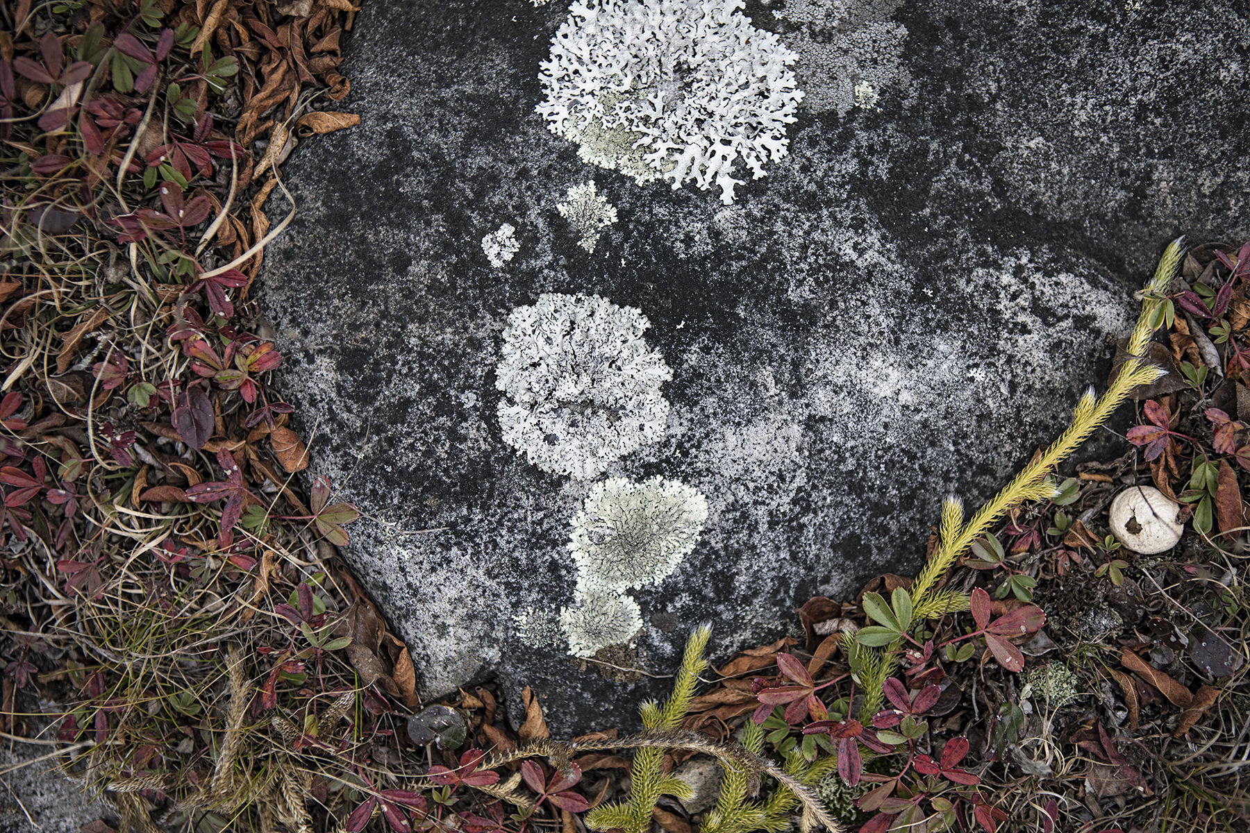 Lichens and moss.