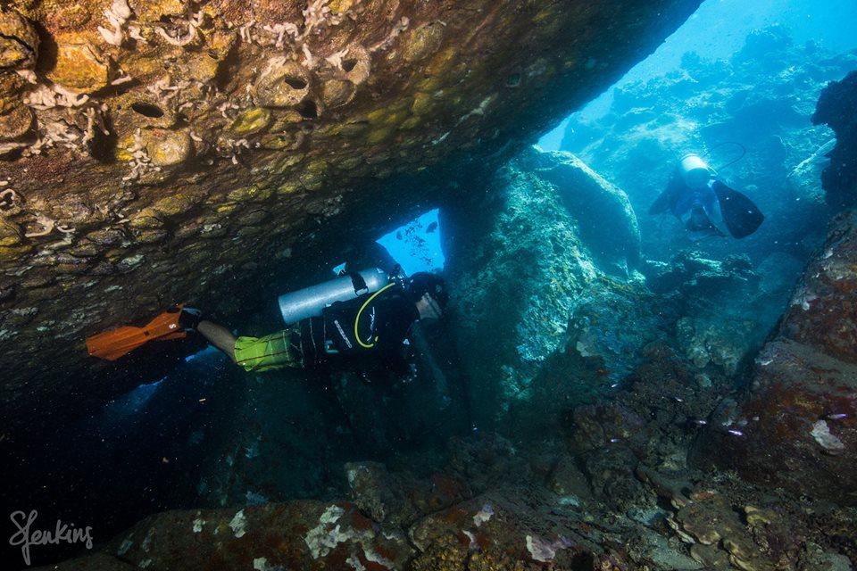 Photo Credit:  Sylvia Jenkins Underwater Photography