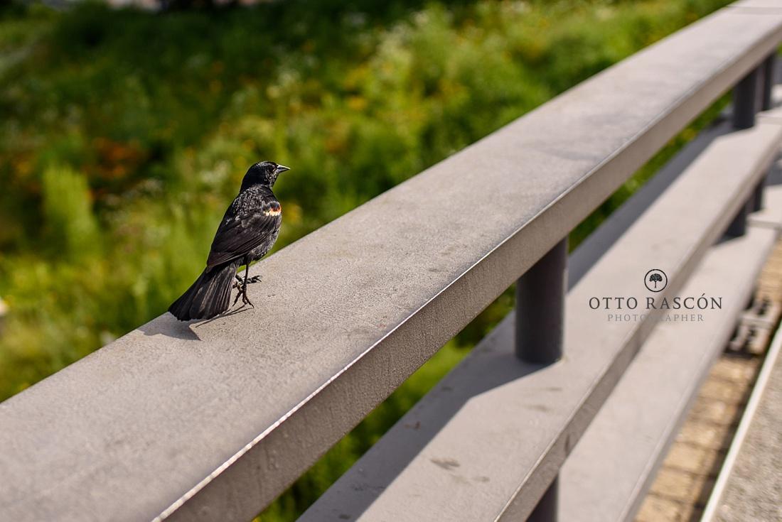 Lincoln_Park_Zoo_Famly_Photos_010.jpg