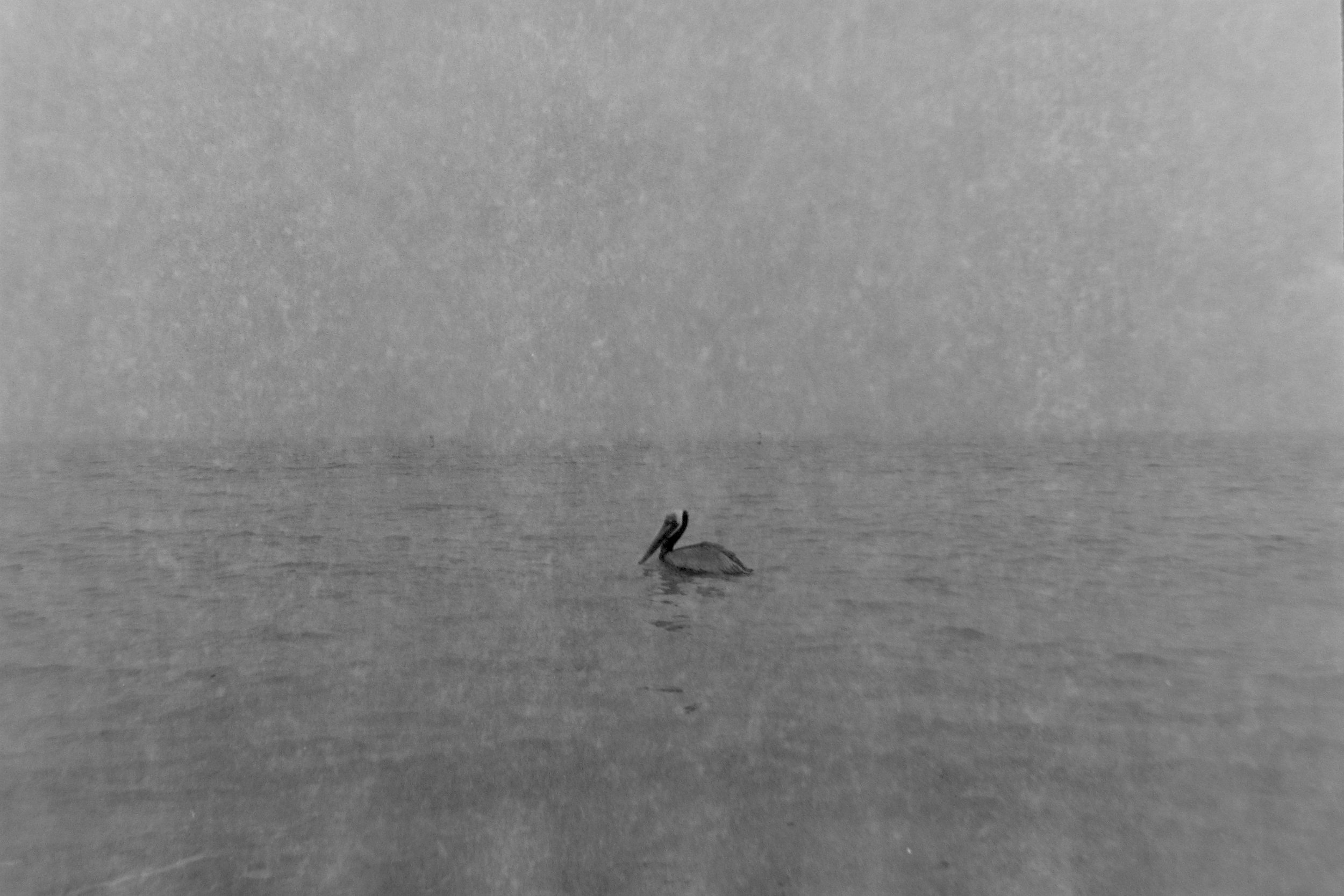 pelican at sand key.jpg