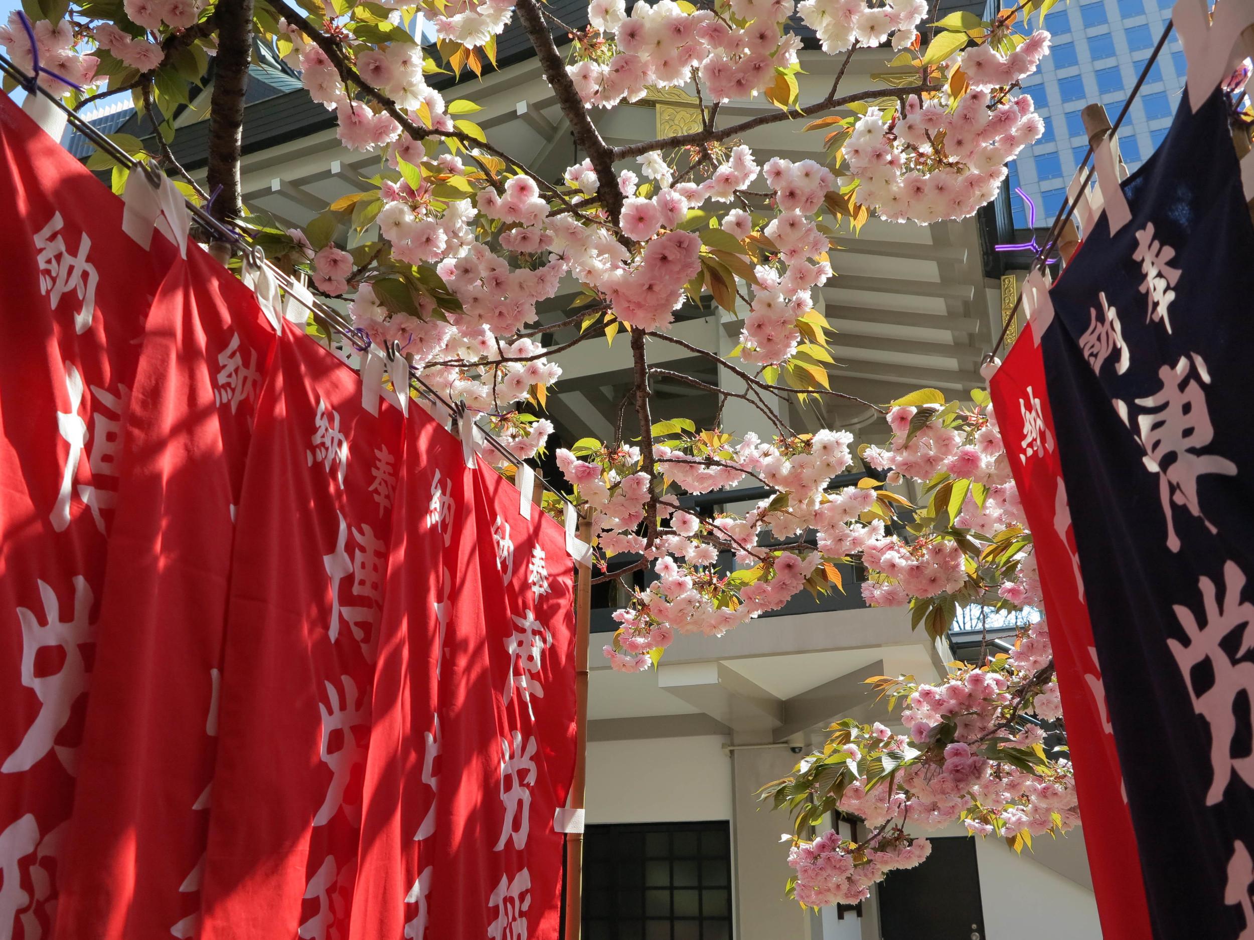 Cherry Blossom Abound
