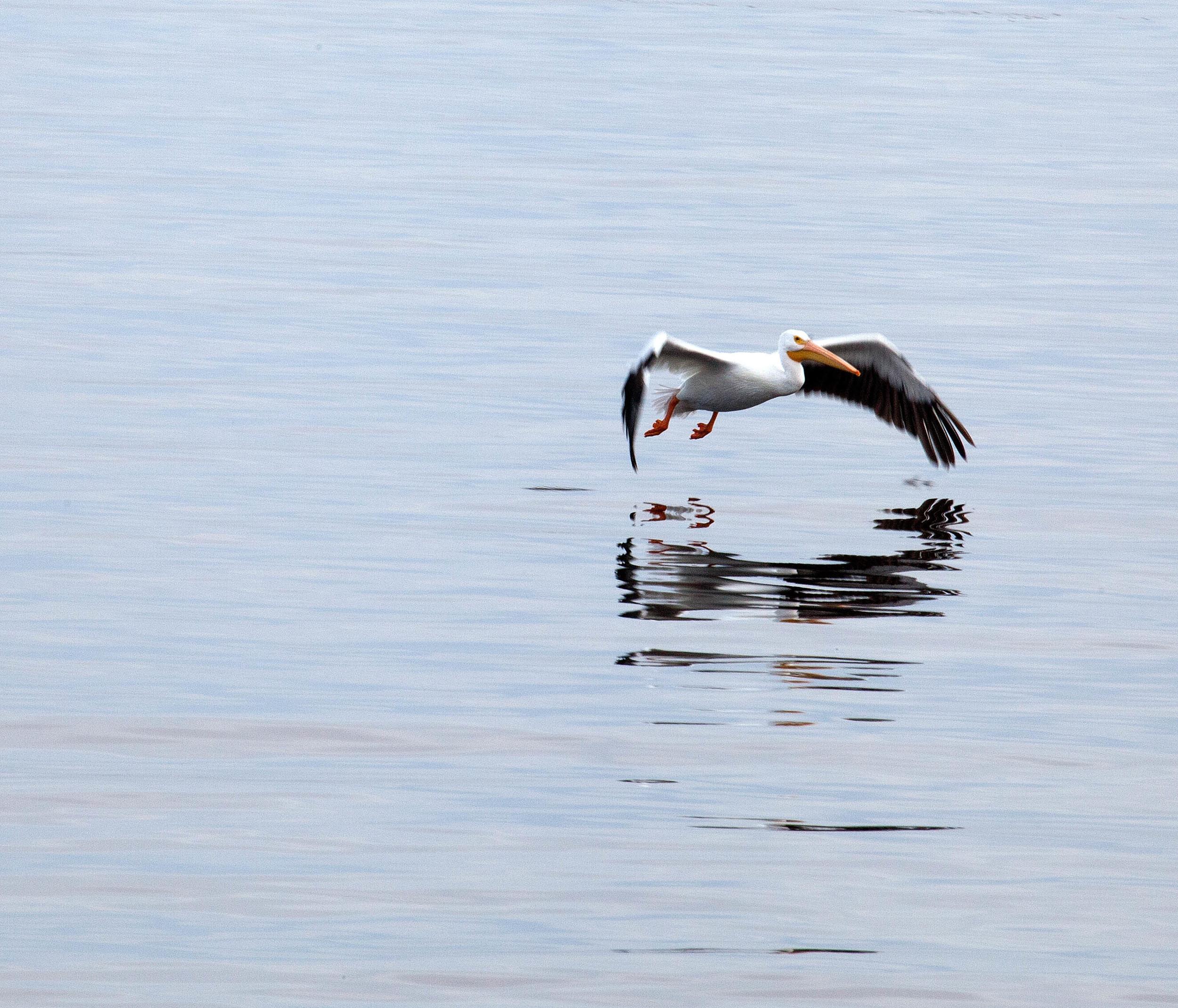 Salton Bird-6.jpg
